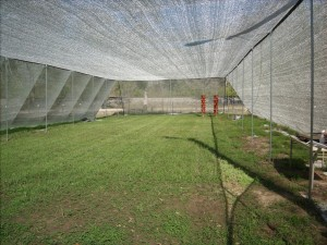 open-air-greenhouse-2011